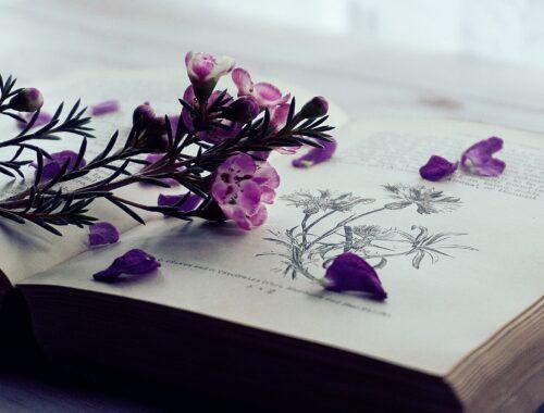 Kwiaty leżące na książce